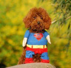Disfraz de superman para perros