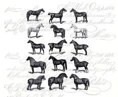 Horse Breeds Vintage Illustration Horses Instant by DIYVintageArt, $1.20 Graphic Image Transfer Art