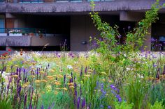 The Barbican –