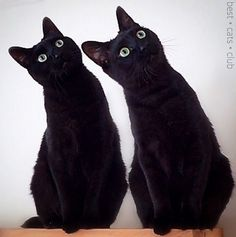 In Sync, Cat Face, Cute Animals, Cats, Instagram, Pretty Animals, Gatos, Cutest Animals, Cute Funny Animals