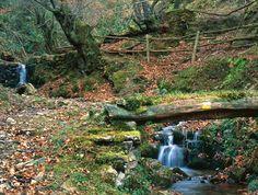 Ruta de Llano - Pomar, en el municipio de #Mieres #Asturias #Spain // Route of Llano - Pomar, in #Mieres council #Asturias #Spain