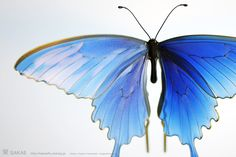 Канзаши Сакае, Япония / 簪作家榮 2011ミヤマカラスアゲハ 簪  Japanese hair accessory -Butterfly Kanzashi- by Sakae, Japan   http://sakaefly.exblog.jp/   http://www.flickr.com/photos/sakaefly/