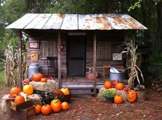 How our Country Cabin Set was set up for Halloween and Fall Portraits