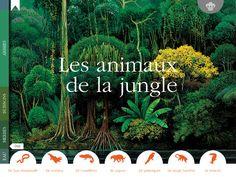Les animaux de la jungle par Gallimard Jeunesse