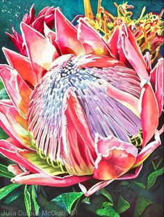 Maui Treasure by Julia Dufault McGrath Watercolor ~ 24 inches x 18 inches Acrylic Flowers, Watercolor Flowers, Watercolor Art, Paint Flowers, Protea Art, Protea Flower, Exotic Flowers, Beautiful Flowers, Rare Flowers