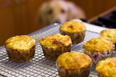 don't these look tasty...they are DOG cupcakes...Apple & Cheddar Pupcakes recipe from the Brown Eyed Baker.