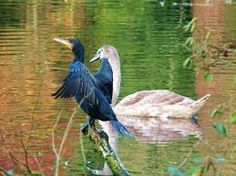 Afbeeldingsresultaat voor Vogels