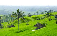 Jatiluwih - Reisterrassen auf Bali © Gudrun Krinzinger Best Of Bali, Hotels, Strand, Golf Courses, Last Minute Vacation, Bali Holiday Deals, Exotic, Landscape