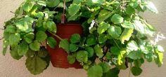 Conheça plantas que atraem energia positiva