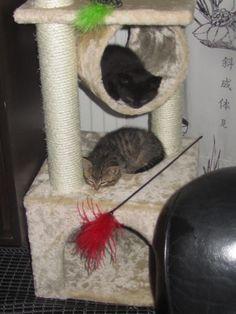 acataikuinenennainen.blogspot.fi by Heini: MY LoVely PETS&CATS. MINUN LEMMIKKIELÄIMET. KISSAT.Suloiset, Ihanat&Lei...