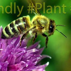 👉Czy znacie i lubicie internetowe challenge?😲 Kojarzycie akcje, jak Movember czy ALS Ice Bucket Challenge, które angażowały miliony i budowały świadomość problemów zdrowotnych czy społecznych? Teraz mamy dla Was propozycję zaangażowania się w pomoc ginącym pszczołom.🐝 W skrócie chodzi o to, aby w swoim ogrodzie, na tarasie lub balkonie zasadzić roślinę przyjazną pszczołom, zrobić zdjęcie albo film i opublikować go w swoich mediach społecznościowych z hashtagami #bee #friendly #plant.. Film, Plants, Animals, Movie, Animales, Film Stock, Animaux, Cinema, Animal