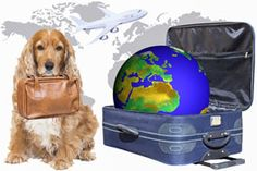 Traveling and Flying With A Service Dog