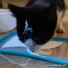 Katze mit Eis