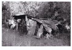 Olive grove shed.  Wendy Lorimer.