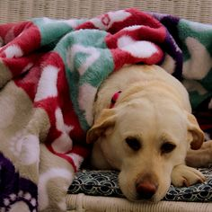 Stunning blankets for girls and blankets for boys. Blankets for babies and blankets for newborns. Kids Blankets, Baby Shower Gifts, Labrador Retriever, This Is Us, Boys, Animals, Baby Shower Presents, Labrador Retrievers, Animales