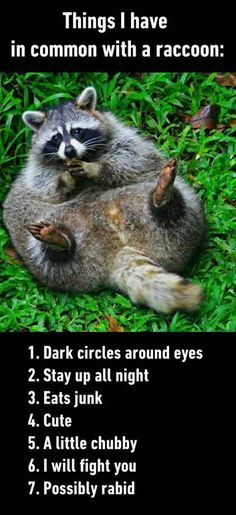 That's me - Trash Panda all the way.