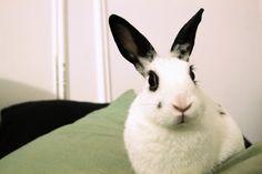 glamour bunny