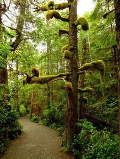 On the Wild Pacific Trail - Ucluelet, west coast of Vancouver Island, Canada (by frtzw906)