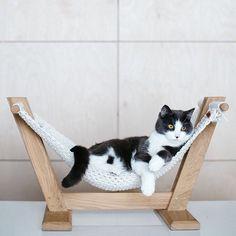 Hamaca de gato cama de gato ergonómica muebles de gato   Etsy Mr Cat, Pet Hammock, Eco Furniture, Cat Crafts, Small Dog Breeds, Handmade Decorations, Dog Accessories, Crazy Cats, Animals And Pets