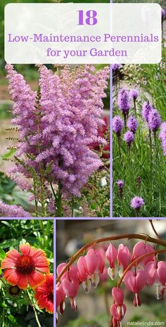 """"" These 18 low maintenance perennials make flower gardening so easy. They're perfe… """" These 18 low maintenance perennials make flower gardening so easy. They're perfect for beginners and for beautifying your yard with minimal effort! Garden Shrubs, Garden Plants, Flower Gardening, Veg Garden, Chicken Garden, Gravel Garden, Fruit Garden, Terrace Garden, Shade Garden"
