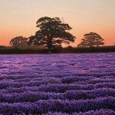 Provence,hope I can have time to visit this summer XD