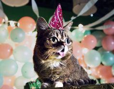 9 Internet-Famous Cats Who Were Adopted