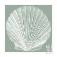 Seabreeze Shells II Art Print by Vision Studio at Art.com
