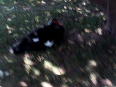 Un pato en la puerta del Rosedal de Palermo