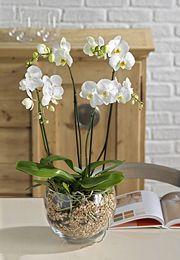 magiche orchidee