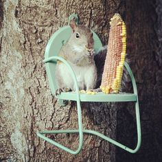 #Chair #squirrel feeder