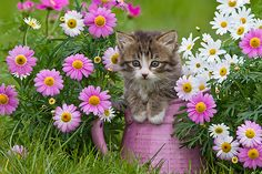 Spring Flowers and Easter Plants That Are Poisonous to Cats - Wildlife Planet Cute Cats And Kittens, I Love Cats, Kittens Cutest, Cat Flowers, Spring Flowers, Pretty Flowers, Most Beautiful Animals, Beautiful Cats, Easter Plants