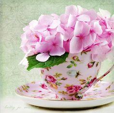 tea cup and hydrangea