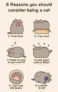 Cat humor!
