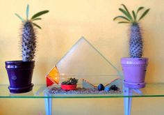 Beach house stained glass terrarium, tiny succulents and Magadascar Palm.