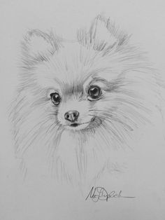 Graphite Print  POMERANIAN by MarieDuplechien on Etsy
