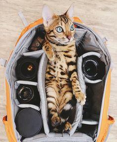 Meet Suki, The Adventure Wondercat Who Became an Instagram Star #inspiration #photography