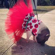 Rosie Red Tutu Dress by SnortLife on Etsy