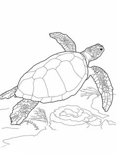 Sea Turtle, : Loggerhead Sea Turtle Coloring Page