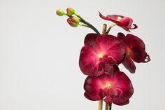 Vaso com Orquídea Bordô 66 x 25 cm | A Loja do Gato Preto | #alojadogatopreto | #shoponline | referência 70963175