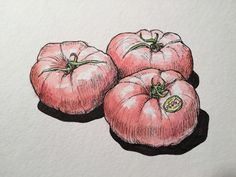 Ink and watercolor still life –tomatoes