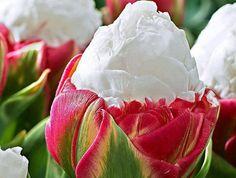 1322x1000 desktop wallpaper for flower