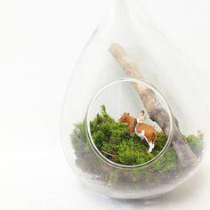 chapparal studido/moss hanging terrarium