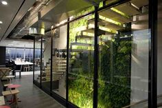Internal green wall at Origin Energy, Melbourne