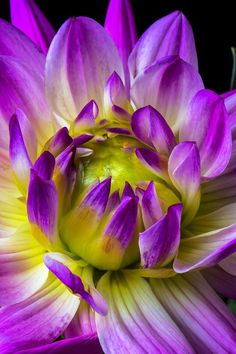 ~~Pink Dahlia Close Up by Garry Gay~~