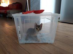13 Fantastiche Immagini Su Lettiera Cat Litter Boxes Hidden