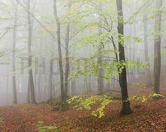 Klöva Hallar Beech Forest, Sweden I - Fotobehang & Behang - Photowall