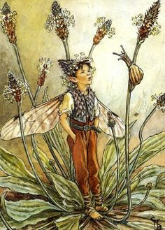 The Ribwort Plantain Fairy, by Cicely Mary Barker.