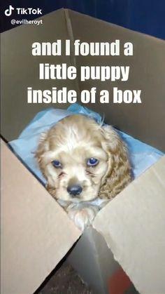 #cutedog #cuteanimals #dogs #doghome #petdogs #cutedogs #dogvideos #dogssmileing #doglife #doglovers #mydog #dogconnection #doglove #lovethatdog #ilovemydog #lovethatdog  #littledogs #gettingadog #bestdogs #puppylove #cutedogpicturs #cutedogsandpuppies #dogloverquotes #dogrescues #adopteddog #adoptadog #puppies #cutepuppy #puppylove Cute Funny Dogs, Cute Funny Animals, Cute Animal Videos, Cute Animal Pictures, Human Kindness, Funny Animal Memes, Animal Humor, Cute Dogs And Puppies, Doggies
