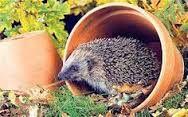 """Résultat de recherche d'images pour """"google images hedgehogs"""""""