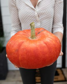 Growing unique pumpkin varieties in Surrey BC at our garden center for the fall season! Beautiful autumn harvest squash and pumpkins. Pumpkin Varieties, Rustic Blankets, Pumpkin Patches, Fall Containers, Seed Catalogs, Diy Deck, Landscaping Software, Fall Plants, Outdoor Planters